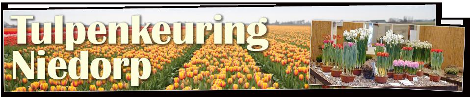 tulpenkeuring-niedorp